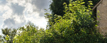 Faux la Montagne, plateau de Millevaches, des gîtes en Limousin pour les vacances